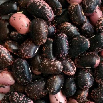 fagiolone-nero